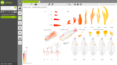 The BAR and other Data Analysis Tools for Plant Biology